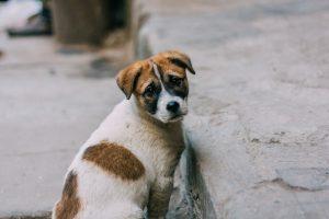 cane abbandono campagna