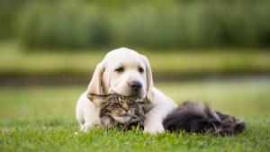 raggio di sole outdoor cuscineria cani gatti dormire