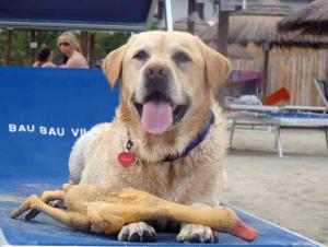 spiagge cani spiaggia