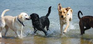spiaggia cani spiagge