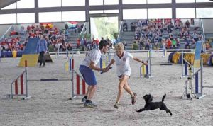 world agility championship