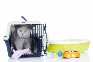 vacanze con il gatto