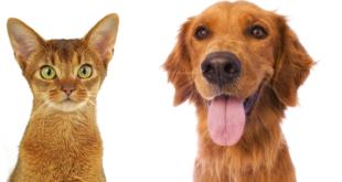 pet economy