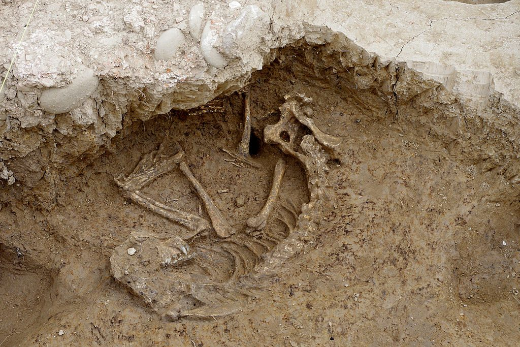 cane di 2000 anni
