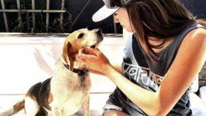 guy the beagle