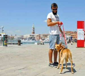 venezia pet friendly