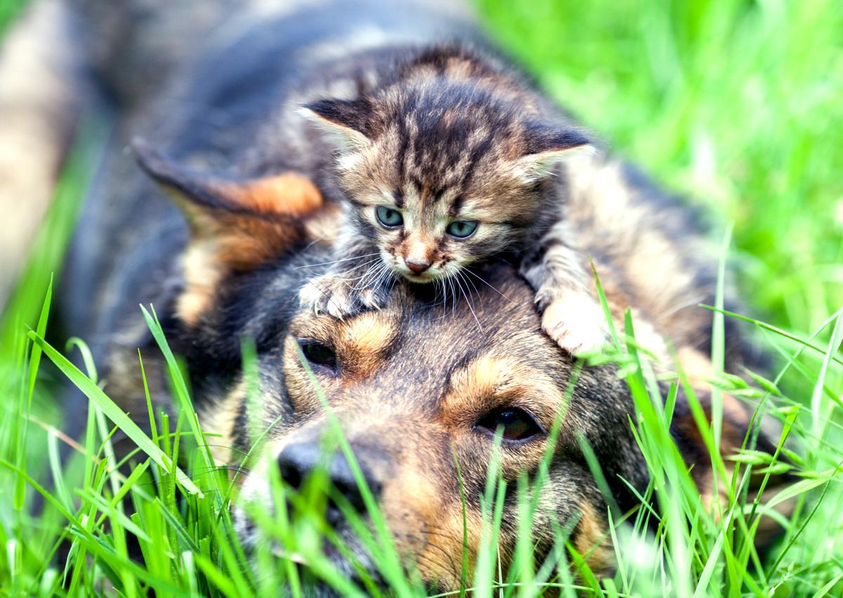 Come Scegliere Il Cucciolo Di Gatto Per La Famiglia Quattro Zampe
