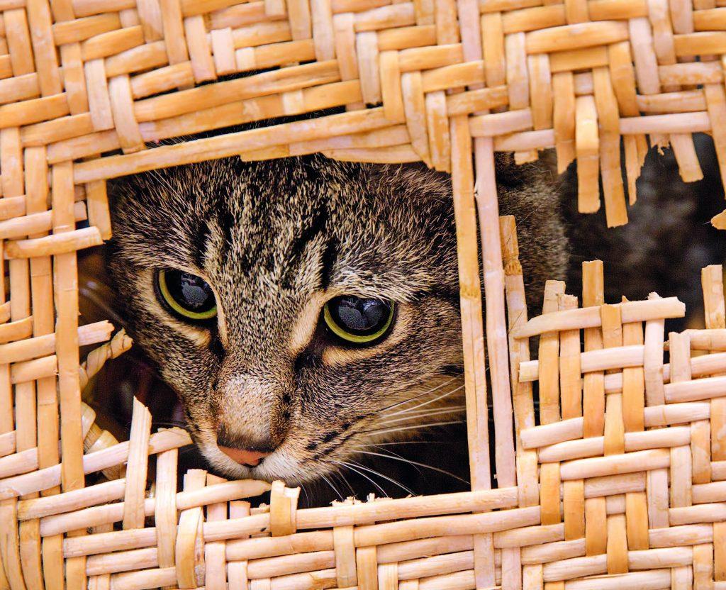 Il Gatto Mastica Tutto è La Pica Quattro Zampe