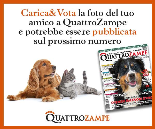 QZ Carica e vota 4-31 dicembre 2019 banner