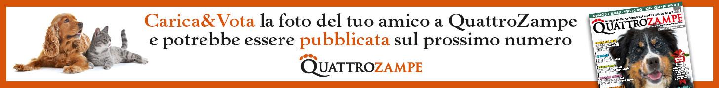 QZ Carica e vota 4-31 dicembre 2019 leaderboard