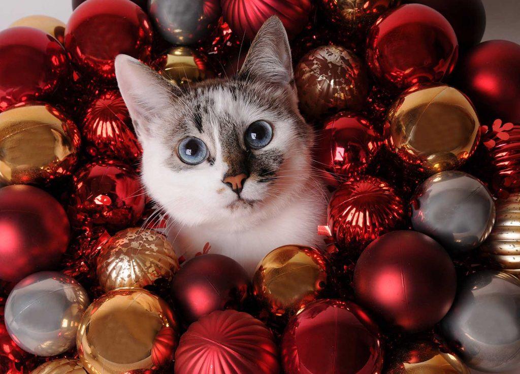 Immagini Natale Che Si Muovono.L Albero Di Natale A Prova Di Gatto Quattro Zampe