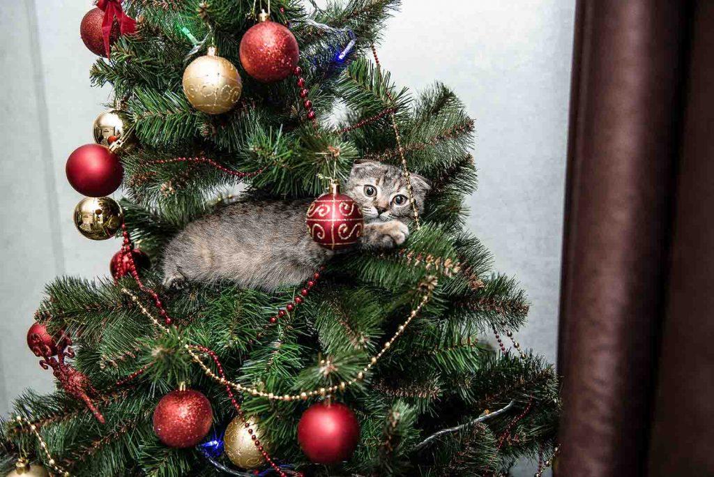 Albero Di Natale E Gatto Come Fare.L Albero Di Natale A Prova Di Gatto Quattro Zampe