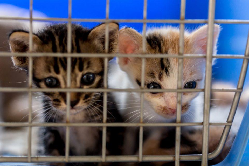 Gran Bretagna Stop Alla Vendita Di Cuccioli Di Cane E Gatto Nei