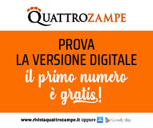 QZ BANNER digitale