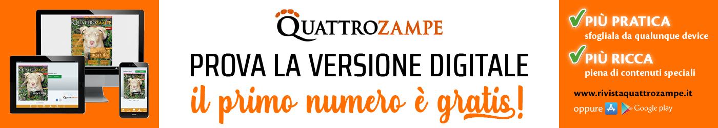 QZ TOP BANNER digitale