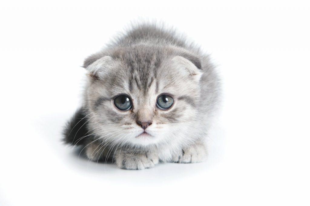 Il Gatto Ha Paura Un Guida Per Aiutarlo Quattro Zampe