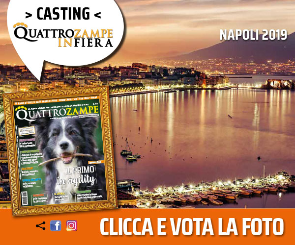 CONTEST QZ IN FIERA NAPOLI