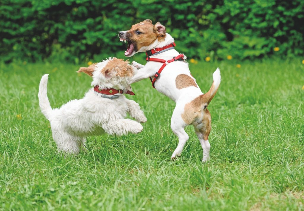 basta cani aggressivi