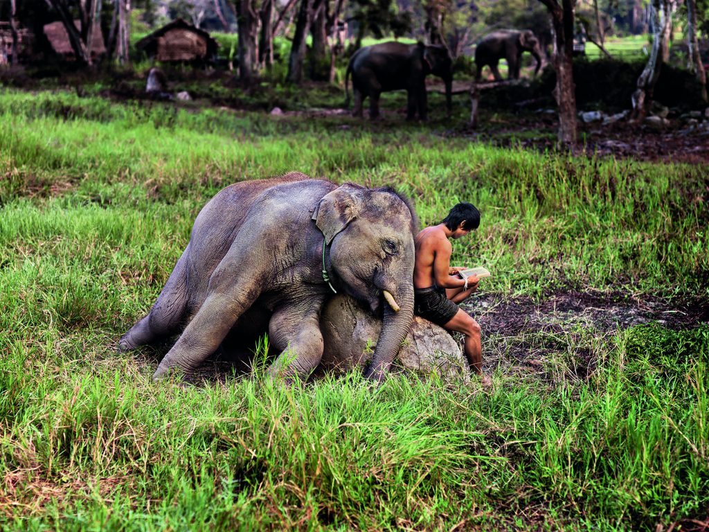 Mahout Reads with his Elephant. Chiang Mai, Thailand, 2010 Steve McCurry