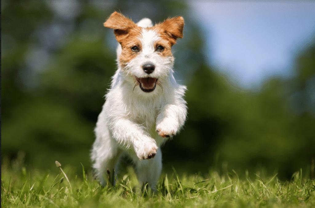 articolazioni cane