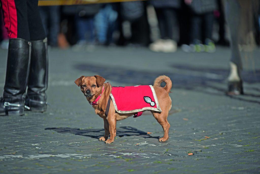 briciola cane carabiniere