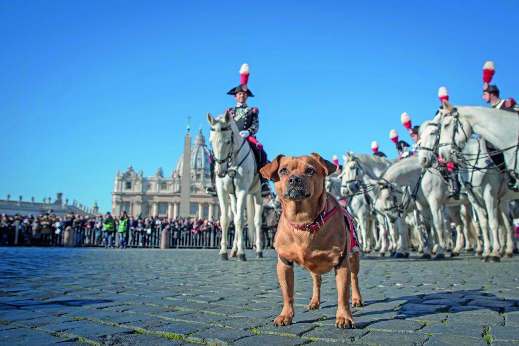 briciola cane mascotte dei carabinieri