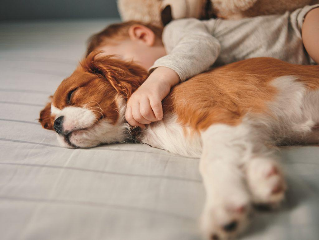 cane-e-bambino-vivono-in-armonia