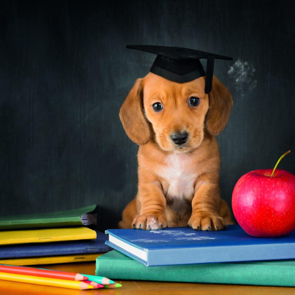 educazione-del-cane