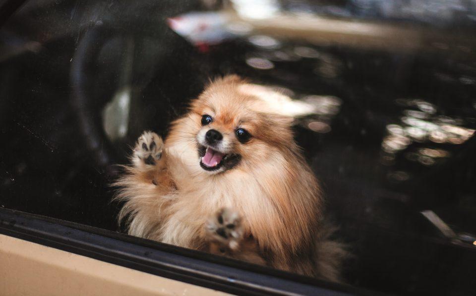cane chiuso in auto