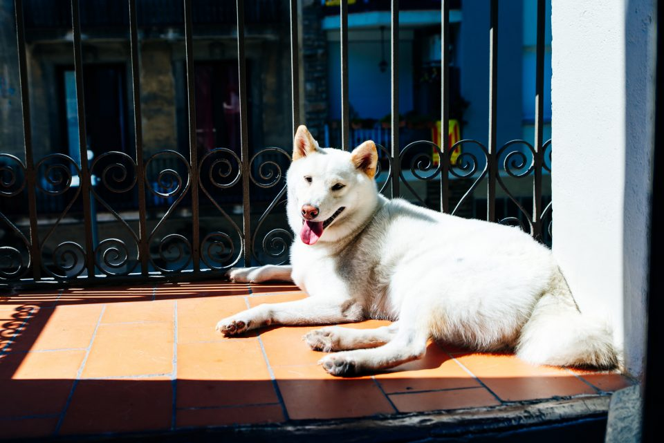 cane sul balcone