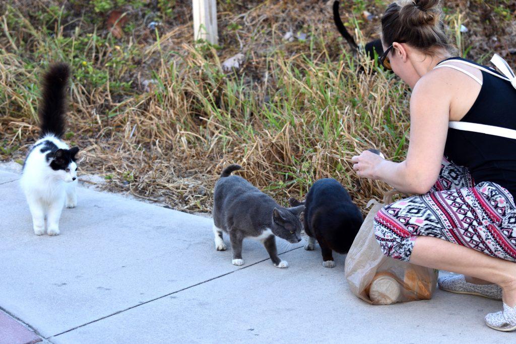 i gatti randagi di roma