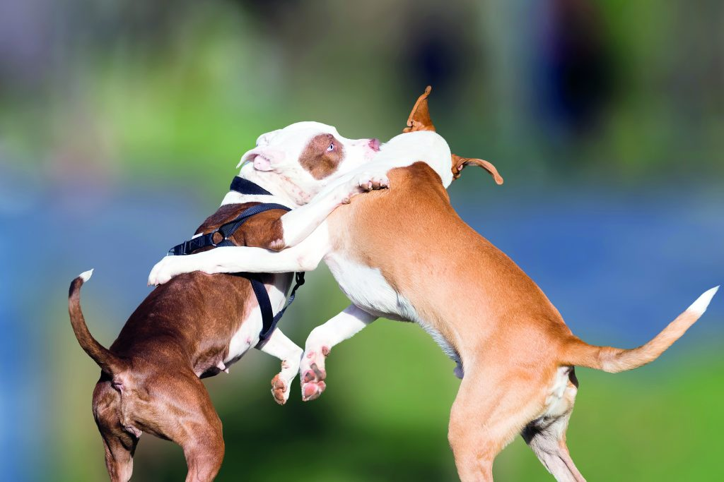 zuffa tra cani