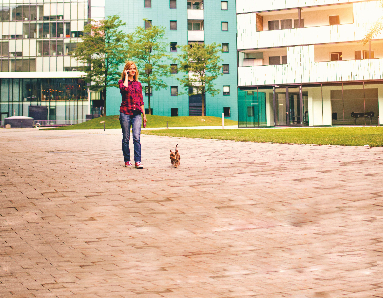 Rete Per Gatti Condominio vivere in condominio con un cane - quattro zampe