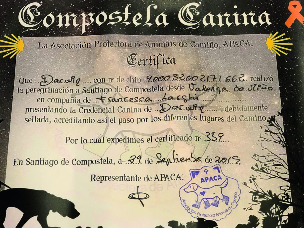 https://quattrozampe.online/wp-content/uploads/2019/12/compostela-canina-image1-2-1024x768.jpeg