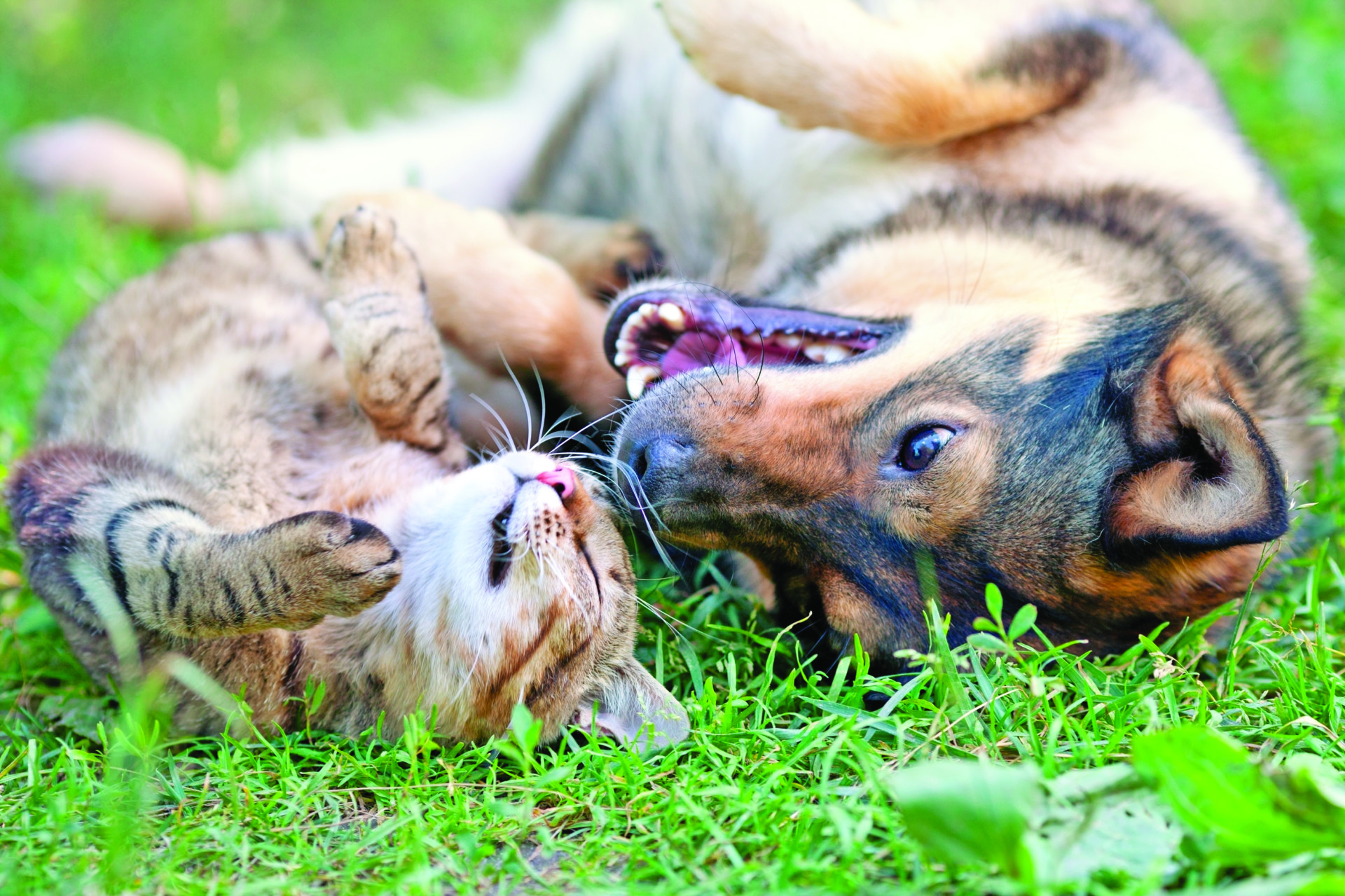 orecchie di cani e gatti