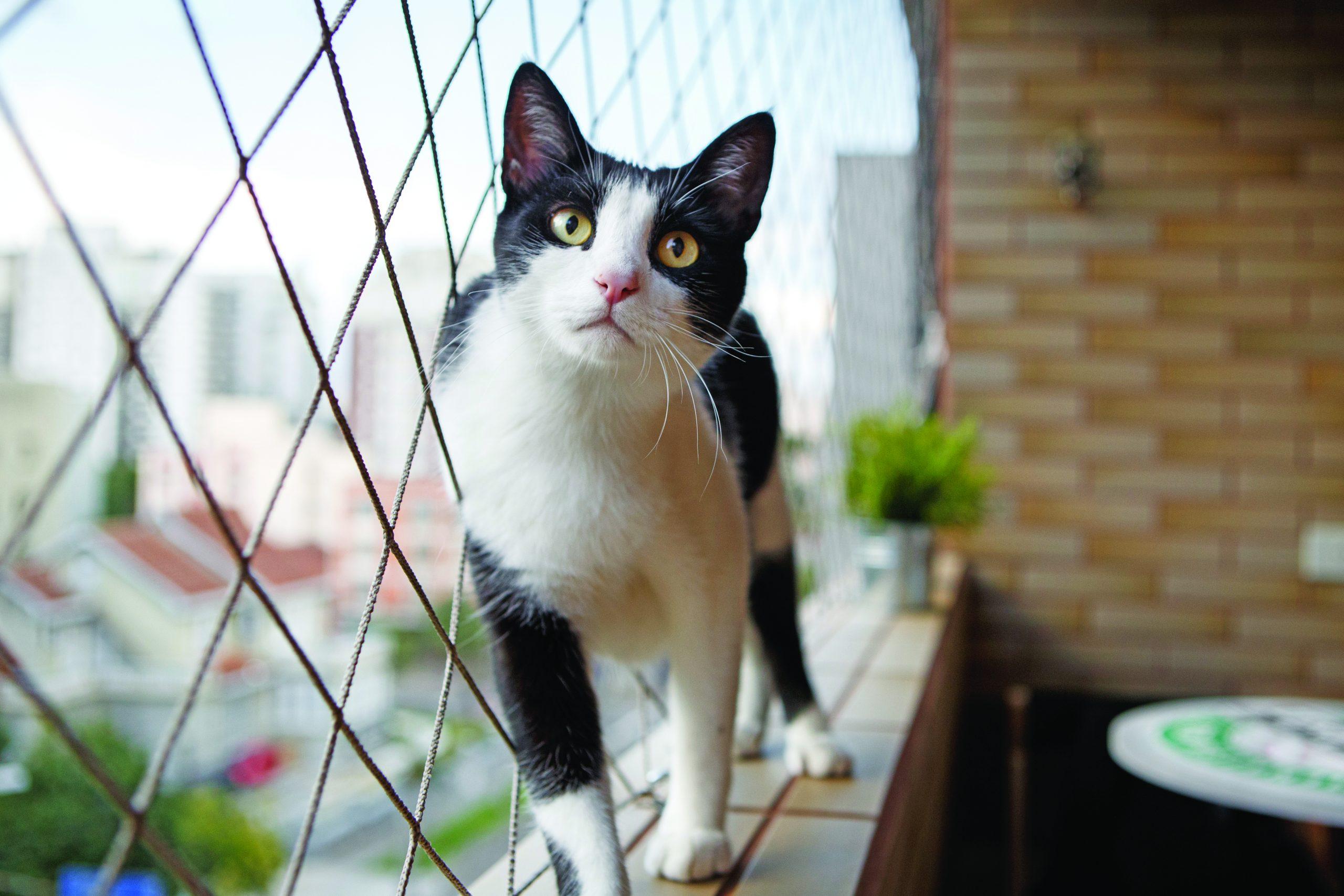Rete Per Gatti Condominio una rete di protezione per i gatti - quattro zampe