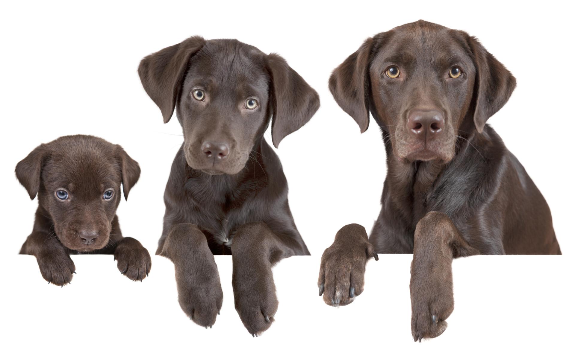 Come calcolare l'età del cane in anni umani