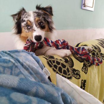 Koda e la sua corda ❤️