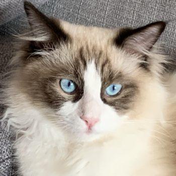 Ron-occhi blu