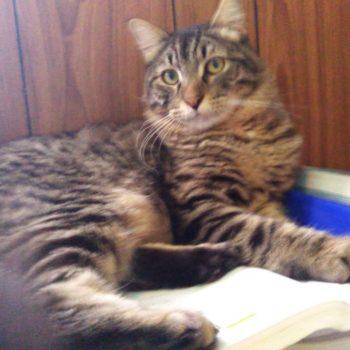 Fujiko mentre studia con me