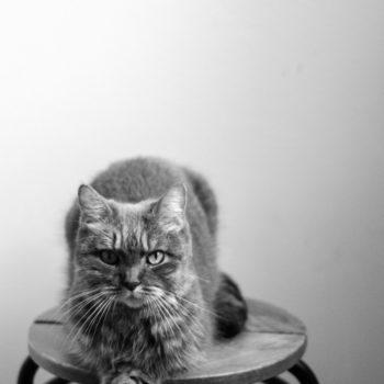 Ciotta,la gatta psicologa