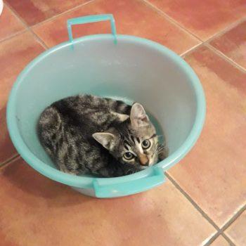 Tiffany nella vaschetta