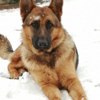 La prima neve di Raoul