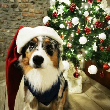 Babbo Natale Koda