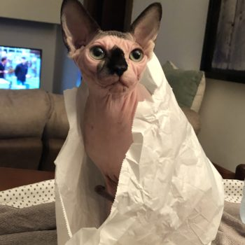 Ho comprato un gatto al panificio...