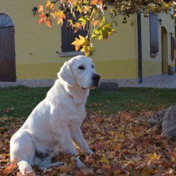 """""""autunno in..... Golden"""""""