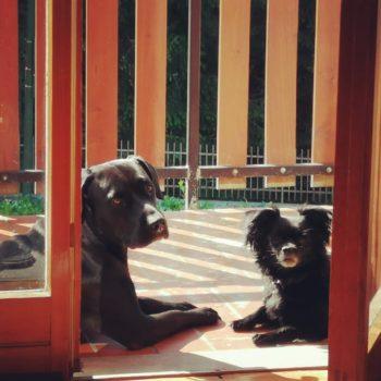 Charlie & Jack