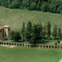 A Gavi, dieci cantine piemontesi si uniscono per un grande vino