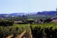 Santa Cassella