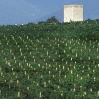 Rocca di Fabbri